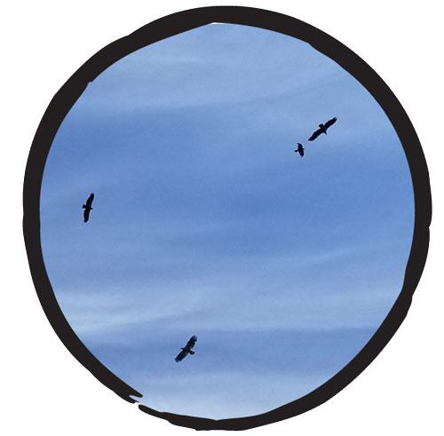 Three birds in a blue sky